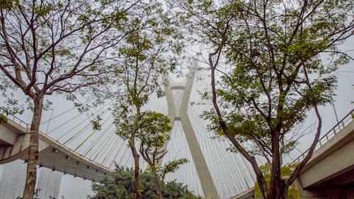 Ảnh lưu trữ miễn phí về cầu, màu xanh lá, thành phố