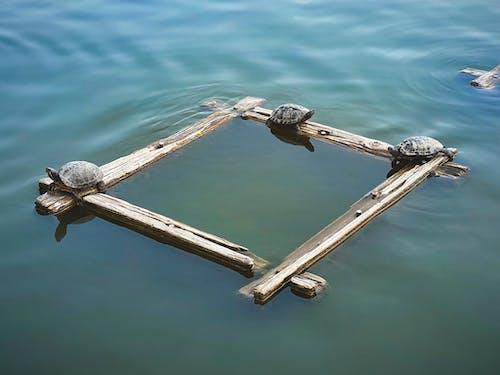 Darmowe zdjęcie z galerii z drewniane belki, gady, japonia