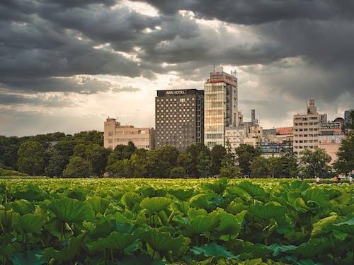 Darmowe zdjęcie z galerii z budynki, dramatyczne chmury, japonia