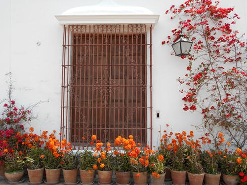 Brown Metal Window Frame Surrounded by Flowers