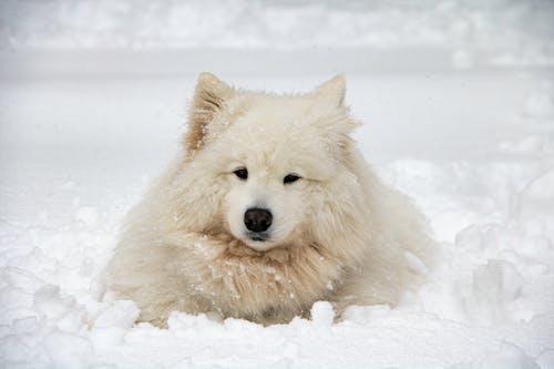 Бесплатное стоковое фото с домашнее животное фотография, животное, земля