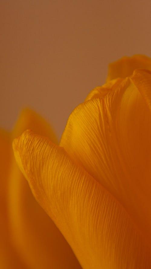 Ilmainen kuvapankkikuva tunnisteilla hauras, hieno, kasvikunta
