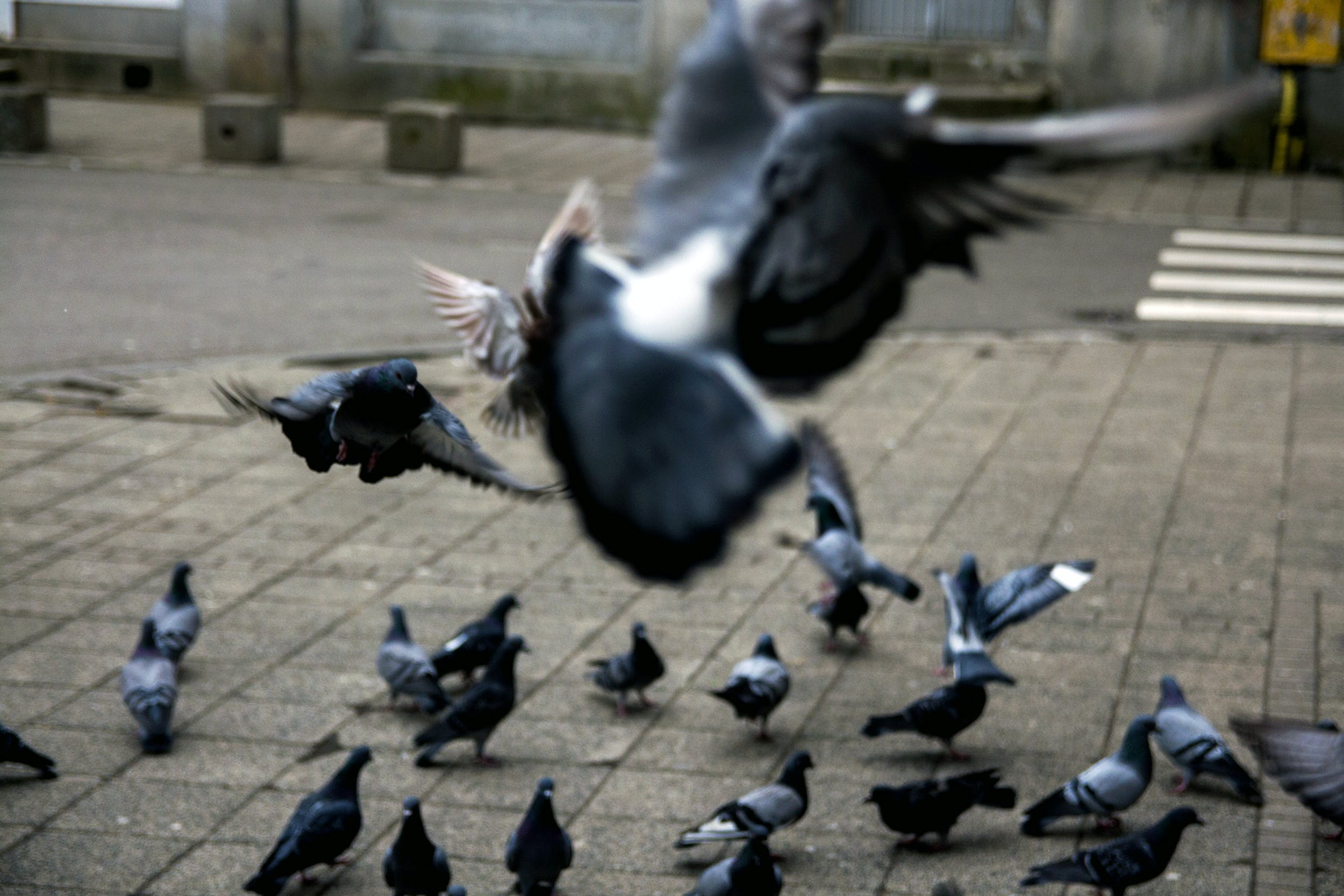 Free stock photo of bird food, birds, old city, pigeons