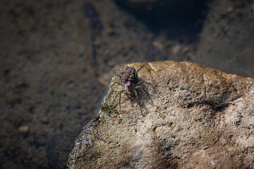 Δωρεάν στοκ φωτογραφιών με rock, αράχνη, αραχνοειδές έντομο