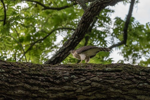 A Hawk Perched on a Tree Branch