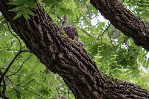 A Hawk Feeding while in a Tree Branch