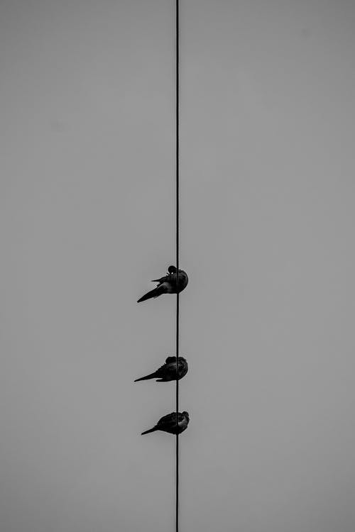 Gratis arkivbilde med dyreliv, elektrisitet, fugl
