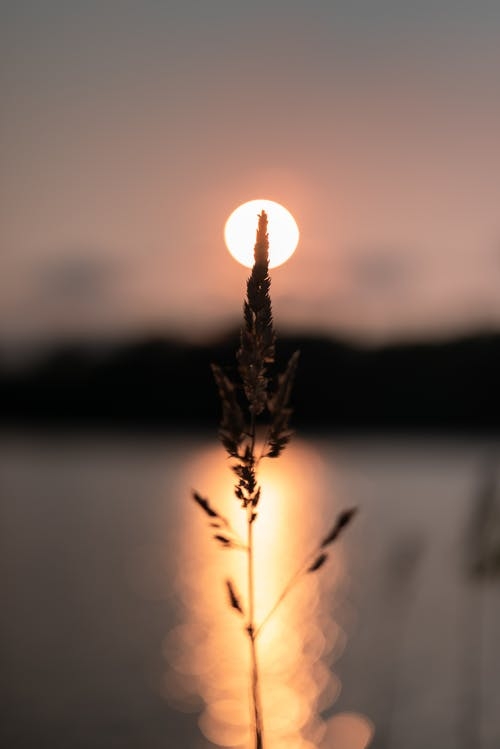 Gratis arkivbilde med daggry, flamme, kveld