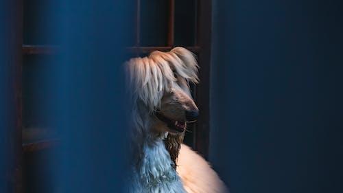 Free stock photo of big dog