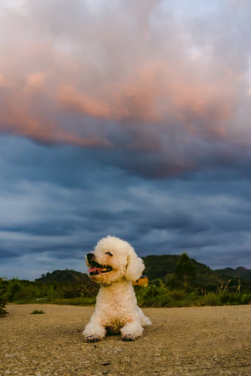 Free stock photo of pet dog