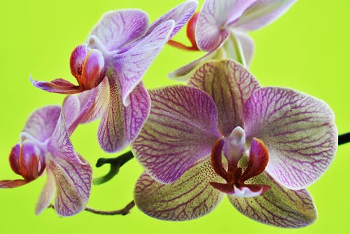 Free stock photo of beauty, delicate, flower, orchid