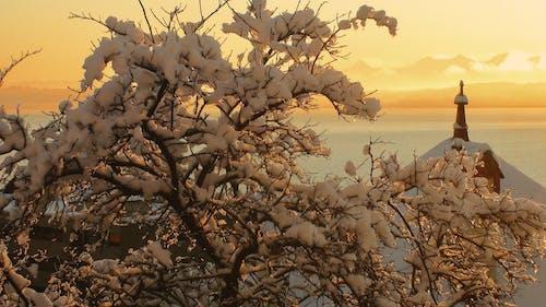 atardecer, invierno, nieve酒店, 拉戈 的 免费素材照片