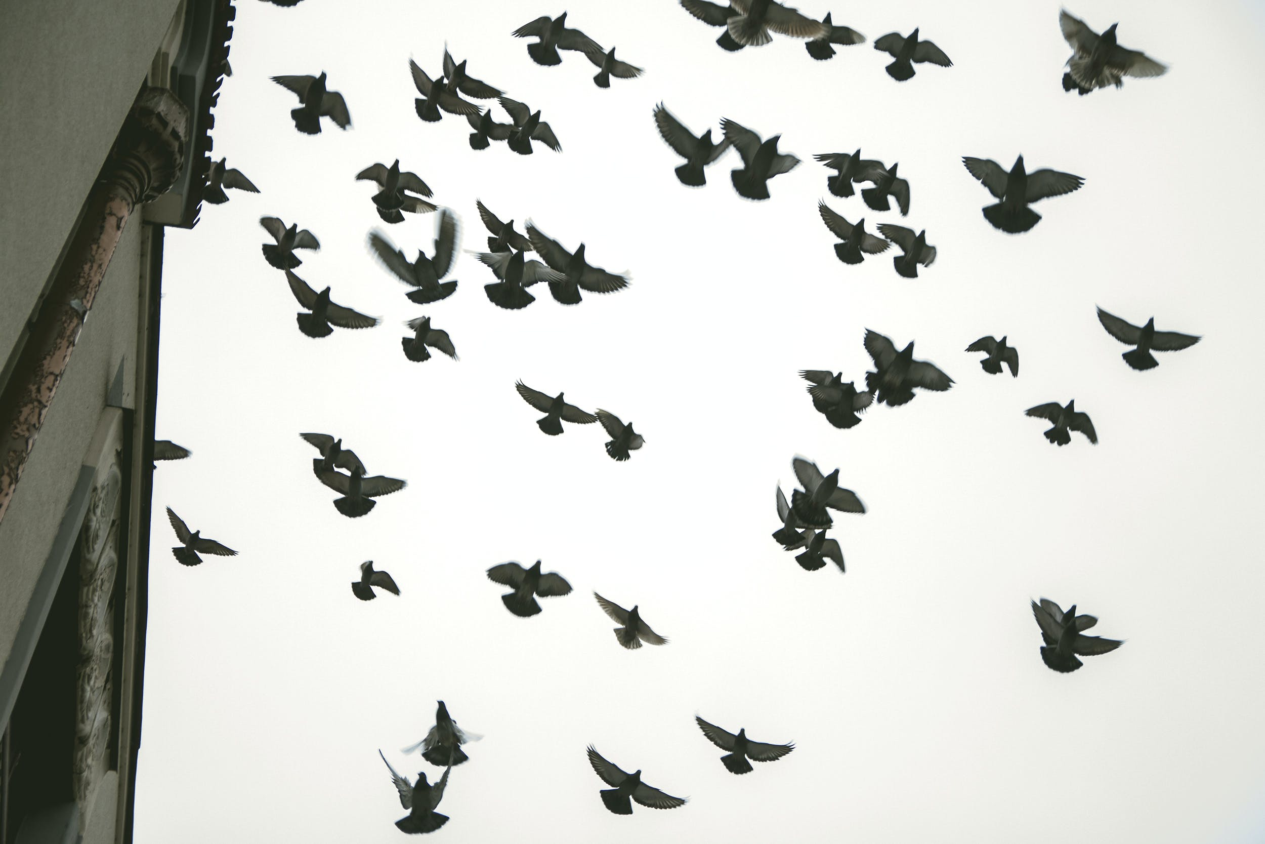 Free stock photo of birds, flight, old city, pigeons