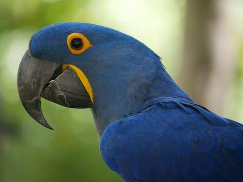 Close-Up Shot of a Blue Parrot