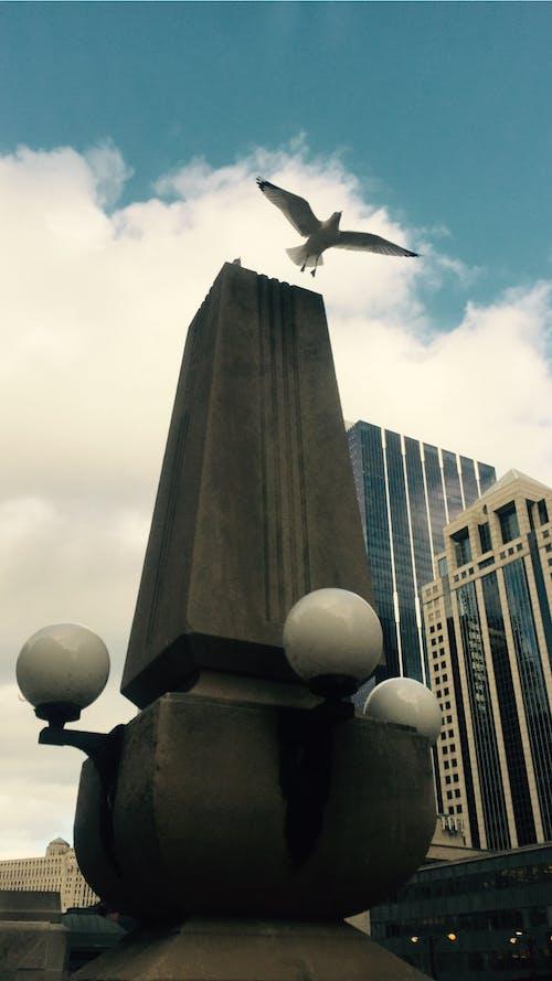 Foto d'estoc gratuïta de #mobilechallenge, cel, chicago, enlairar