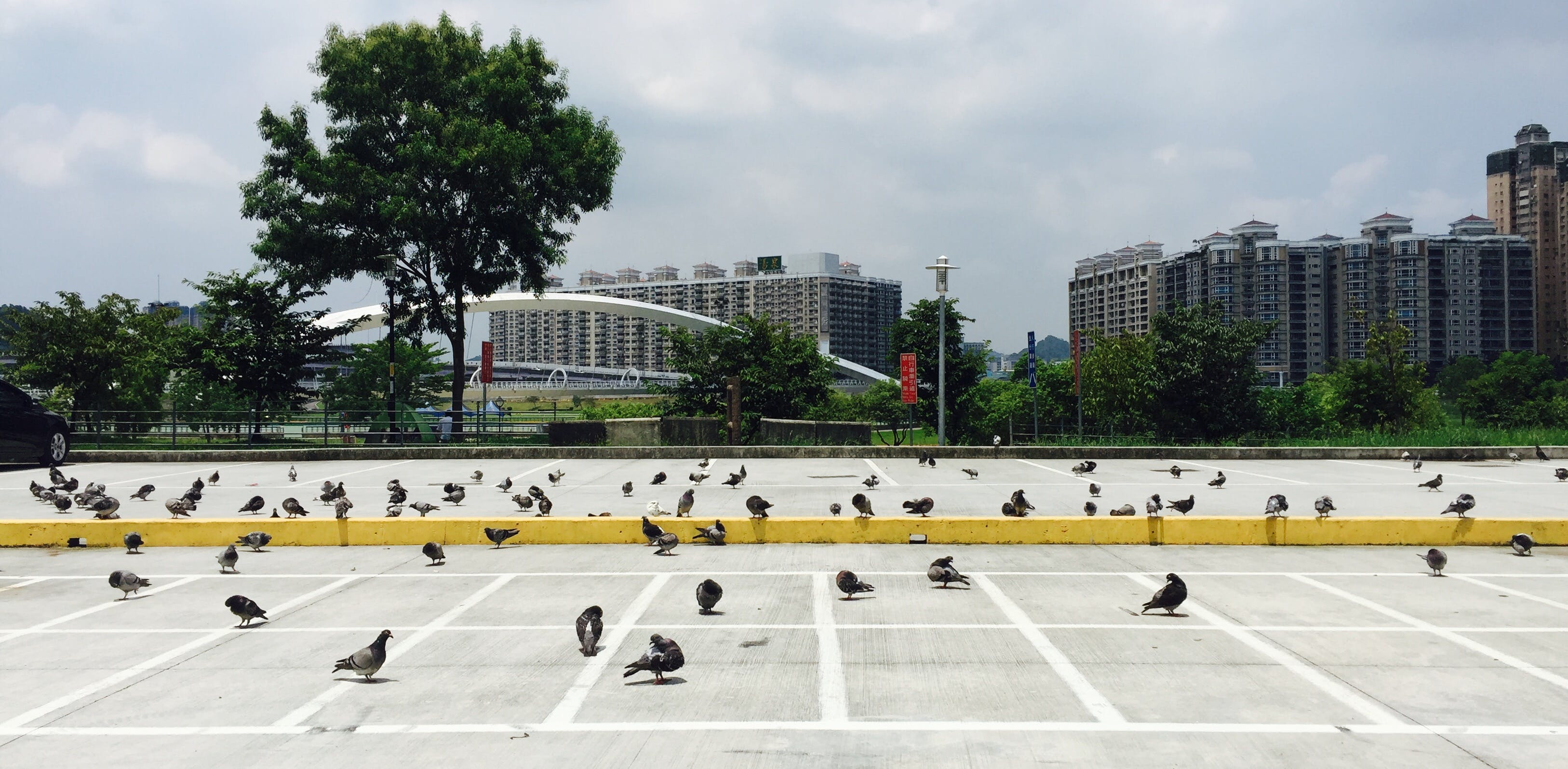 Free stock photo of #mobilechallenge, bird, iphone 6 plus, parking lots