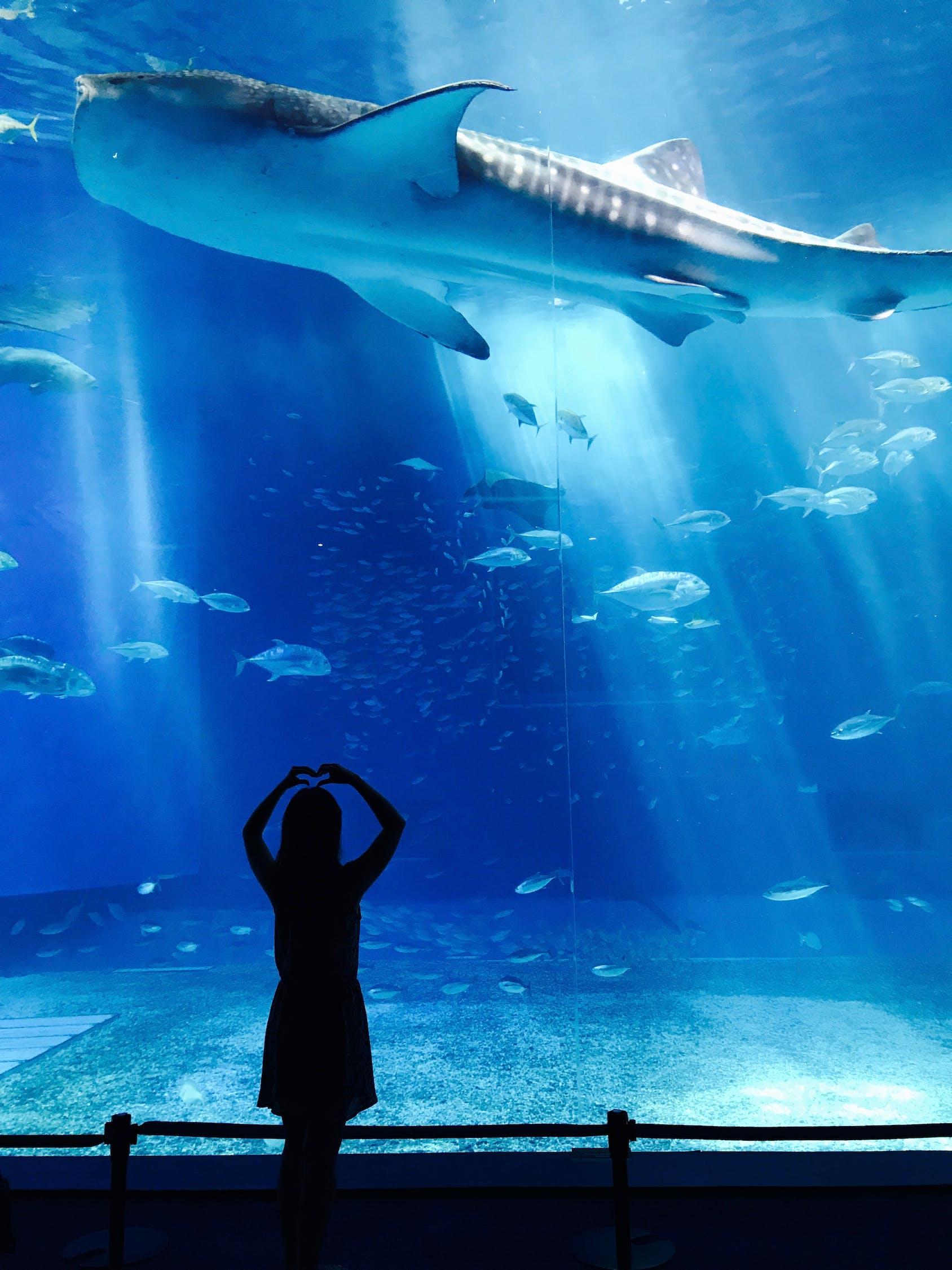动物,水族馆,鱼,女孩,移动厕所,人,游泳,水下,水,野生动物