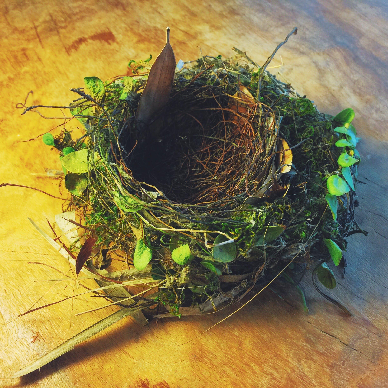 Free stock photo of #mobilechallenge, bird nest, iphone 6 plus, taiwan