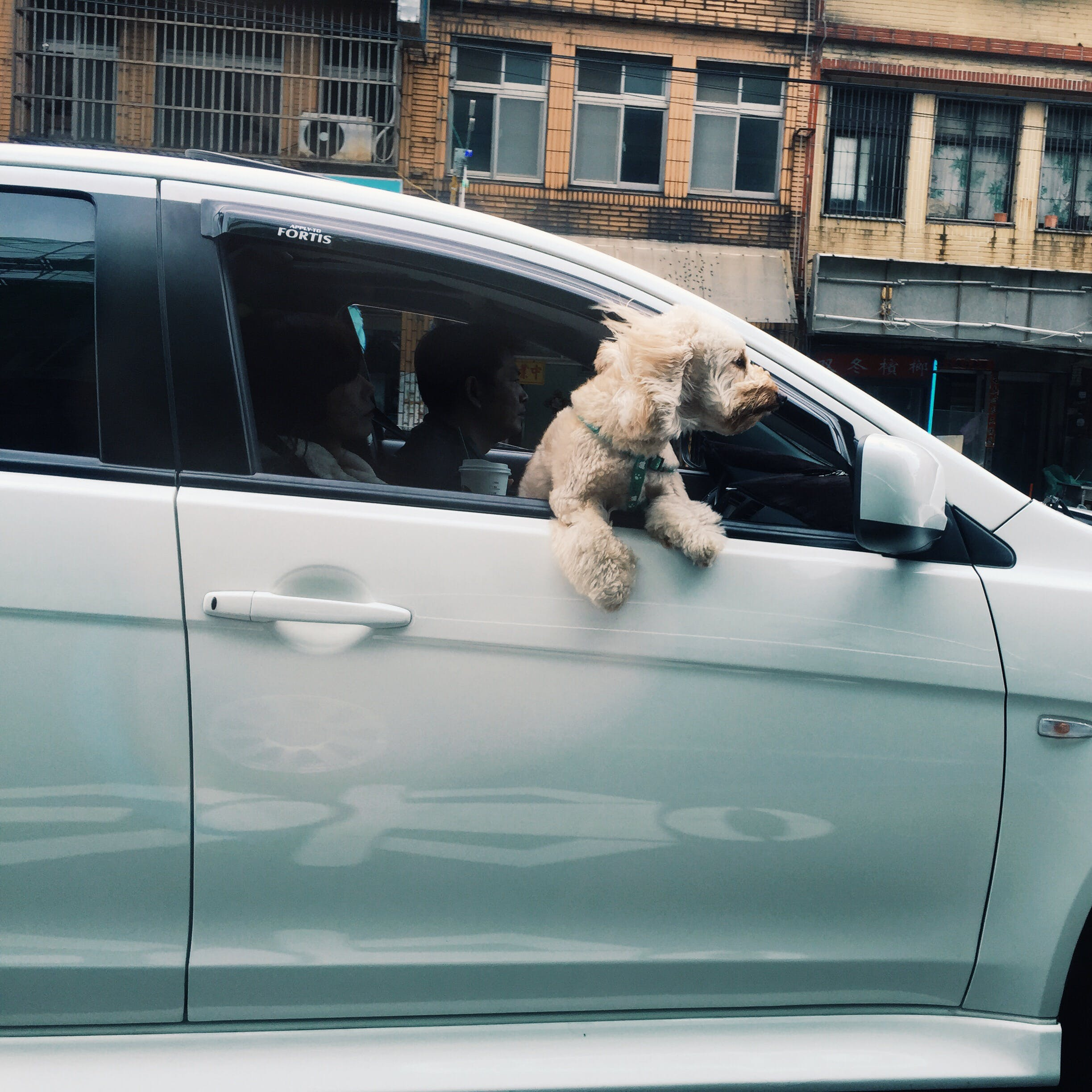Free stock photo of dog, car, vehicle, window