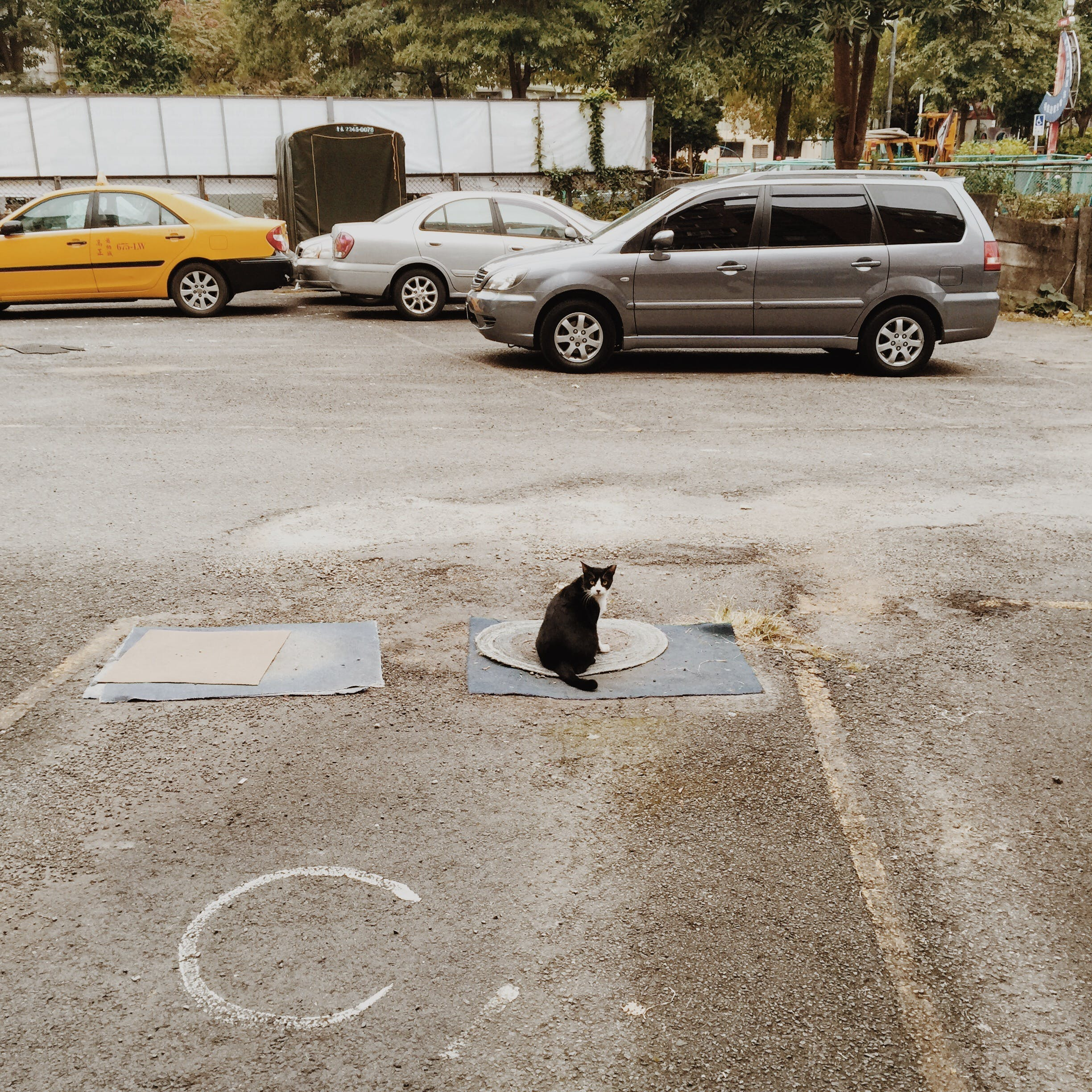 Black and White Cat on the Mat in a Distance of Gray Suv