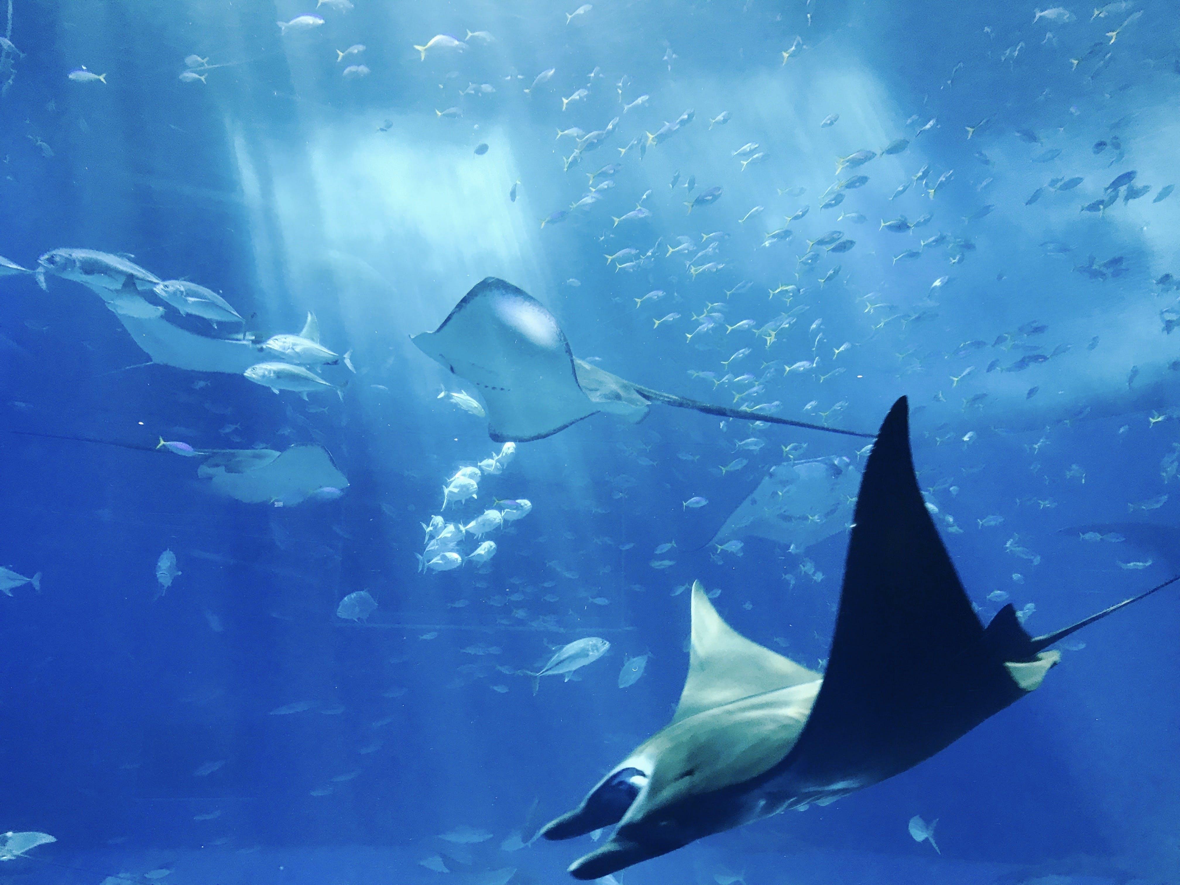 Základová fotografie zdarma na téma akvárium, divočina, hluboký, mobilní výzva