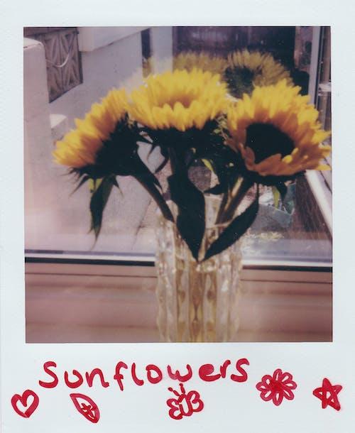 Immagine gratuita di amore, autunno, bouquet