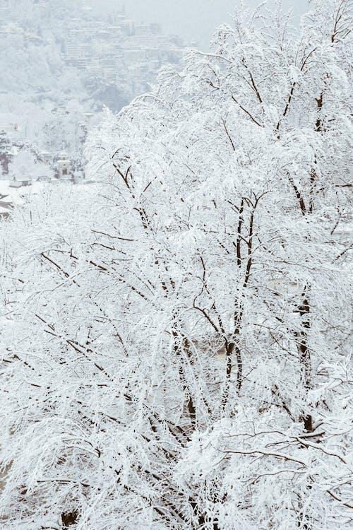 biały, drewno, drzewa