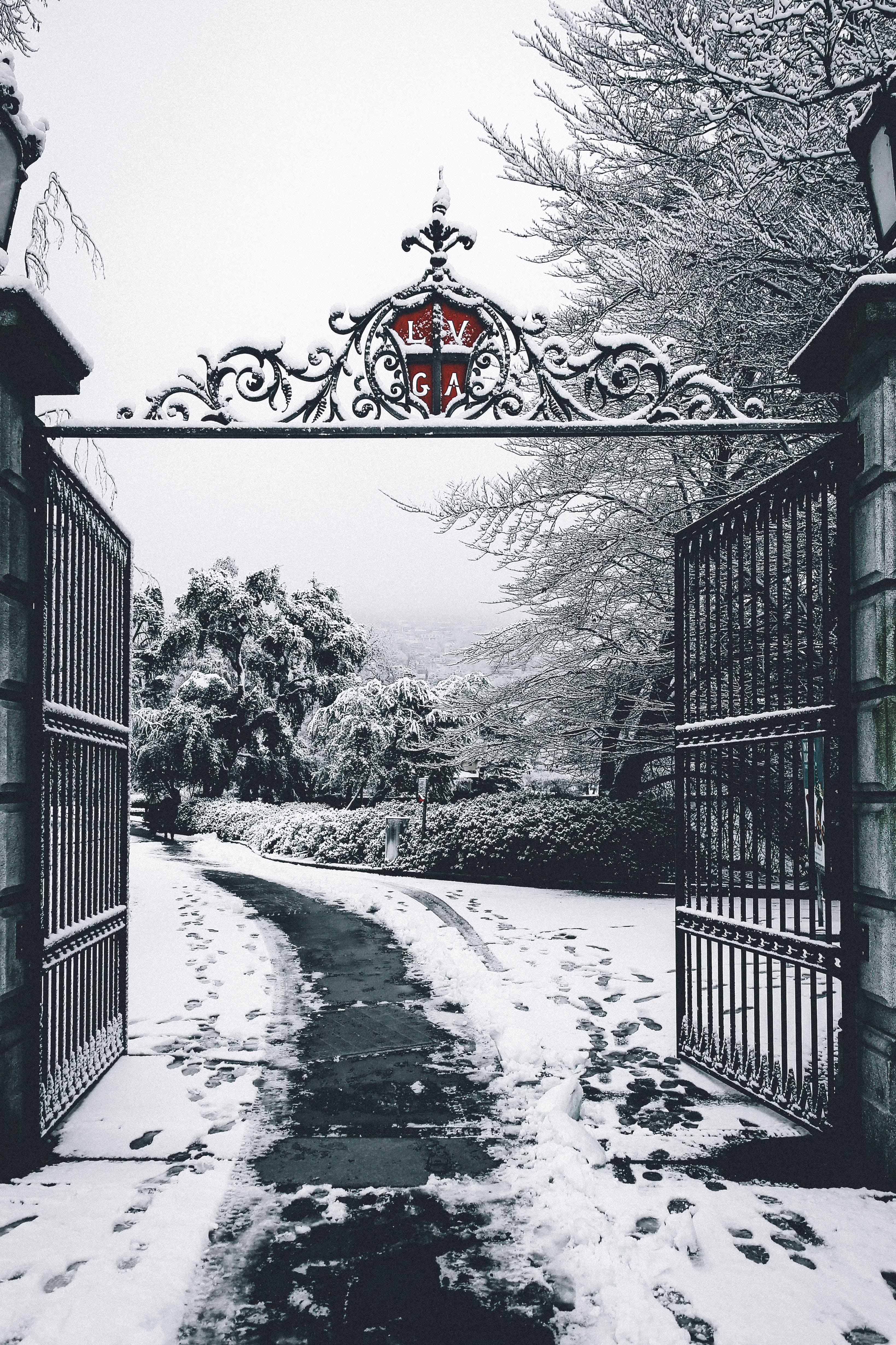 Free stock photo of snow, city, nature, winter