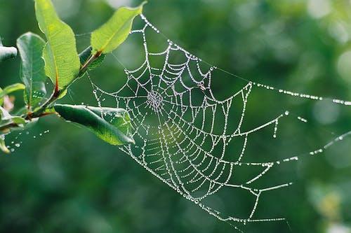 Close-Up Shot of Wet Spider Web