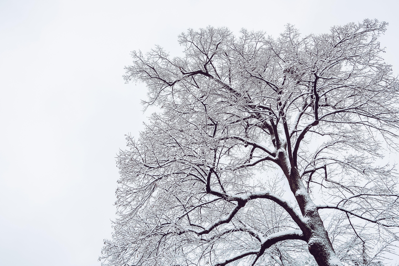 Snow Coated Tree Illustration