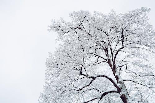Gratis lagerfoto af forkølelse, frossen, frost, grene