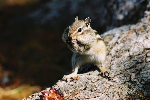 Foto stok gratis binatang, cute, fauna