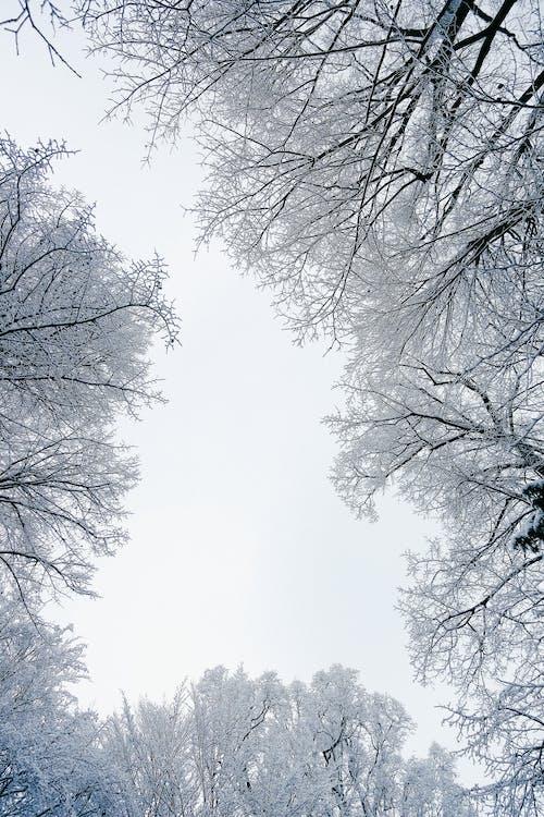 Foto stok gratis alam, beku, bidikan sudut sempit, cabang