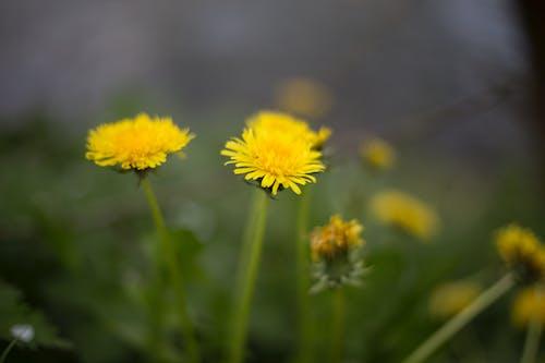 Foto stok gratis alam, bunga-bunga, flora, kilang