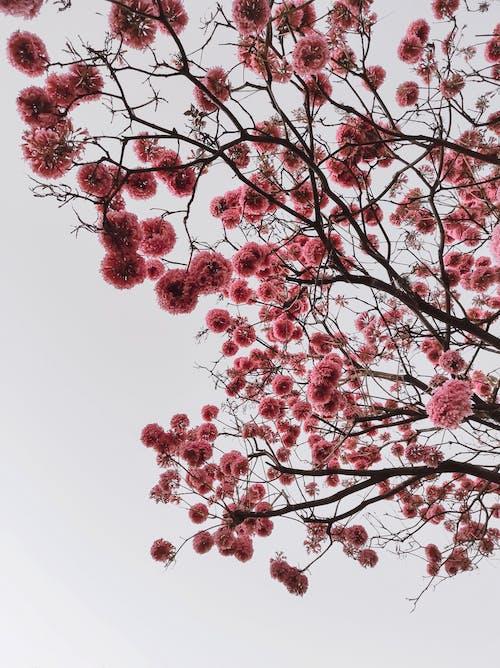 Foto stok gratis alam yang indah, bagus, berbunga