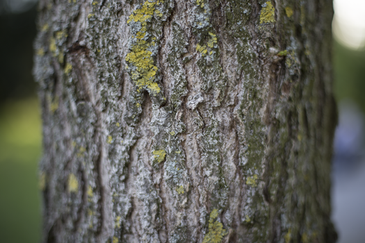 Tree Trunk With Green Moss