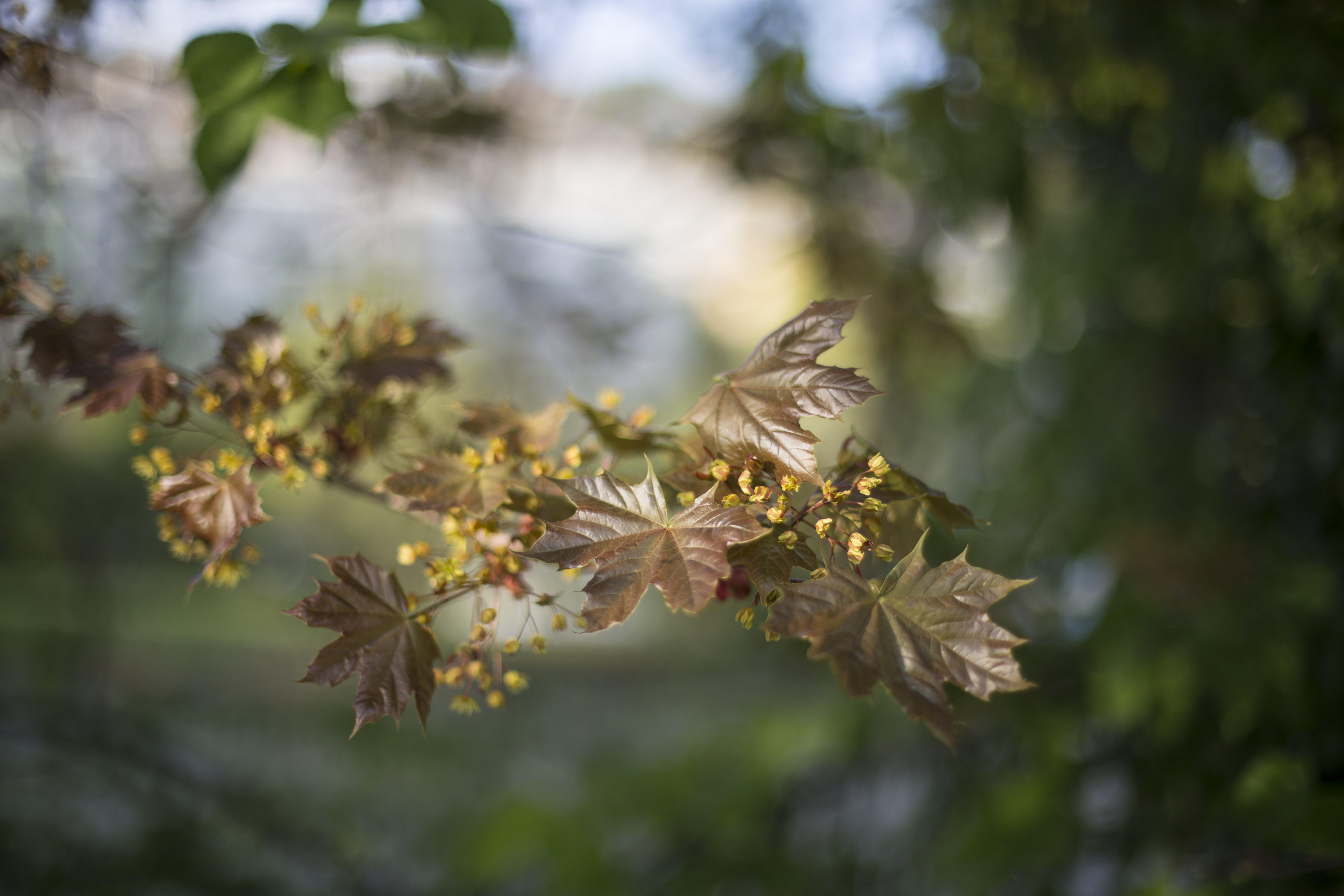 Brown Leaf Plant