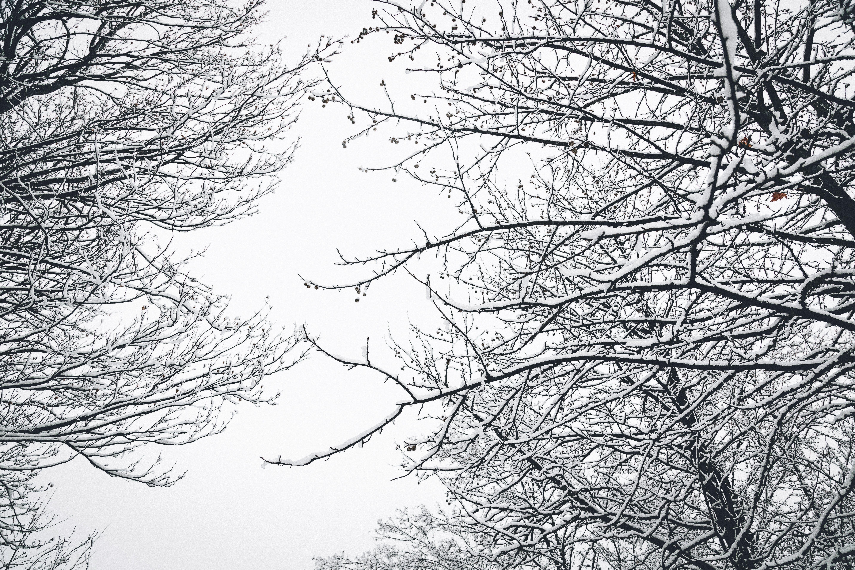 冬季, 冷, 分支機構, 天氣 的 免費圖庫相片