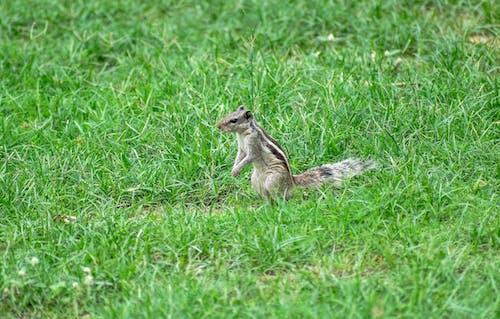 Free stock photo of curious, cute, mammal