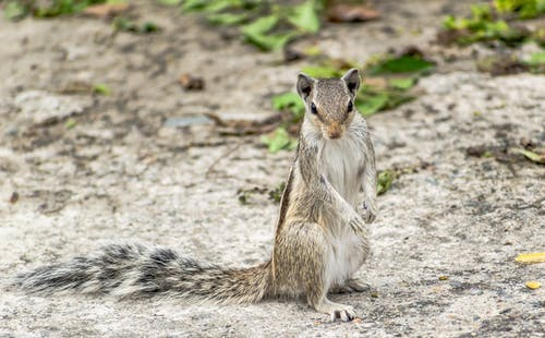 Free stock photo of animal, curious, mammal
