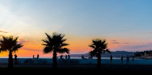 Immagine gratuita di alba, albero, crepuscolo