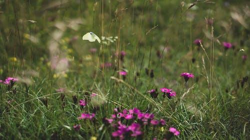 Free stock photo of animal, background, beautiful