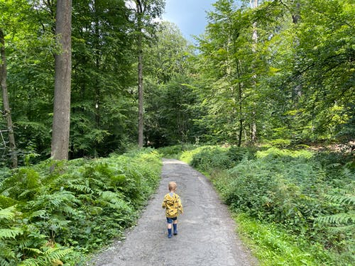 Boy in Yellow and Black Jacket Walking on a Concrete Pathway in the Forest