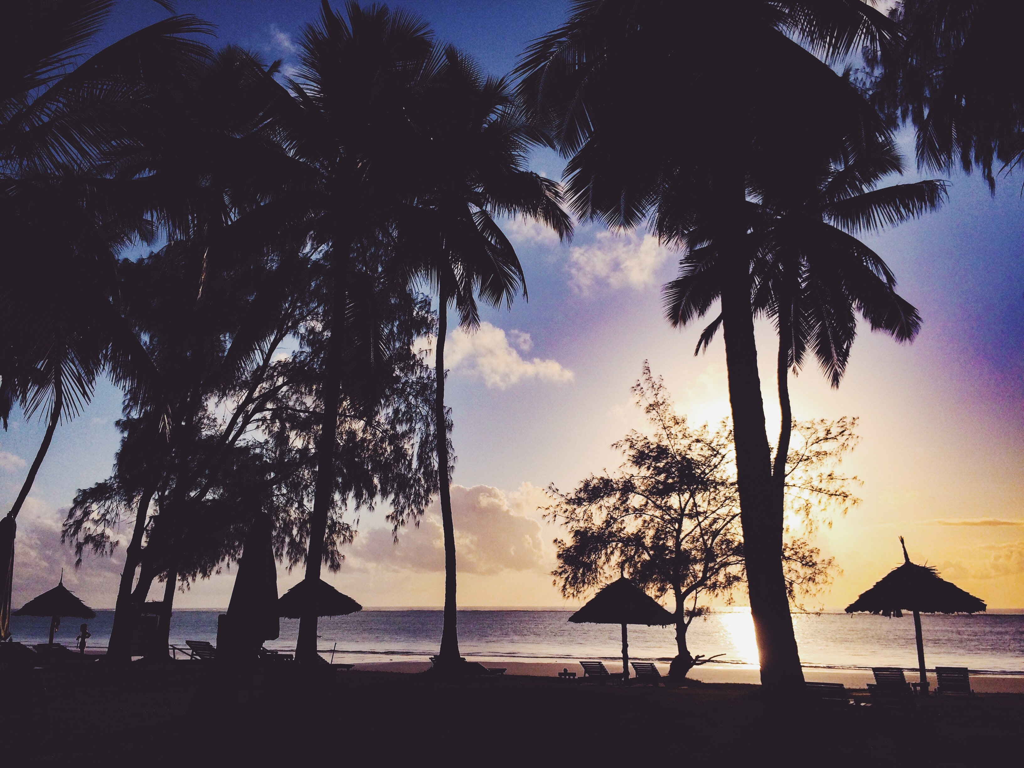 silhouette of man beside tree near seashore  u00b7 free stock photo