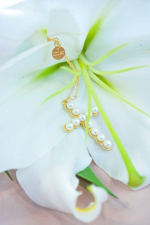 Fotos de stock gratuitas de blanco, dorado, flor