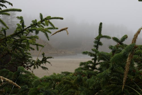Free stock photo of morning, oregon coast