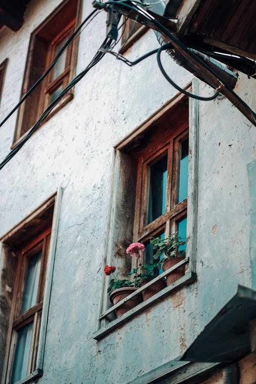 Red and Pink Flowers on Window