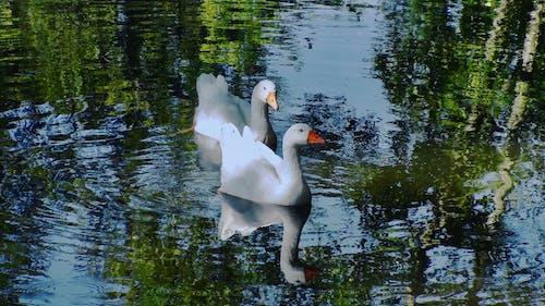 Fotobanka sbezplatnými fotkami na tému ã¡gua, lago, patos, reflejos