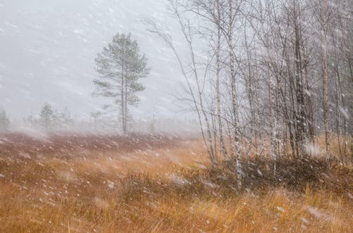 Snow Fall on the Green Grassland