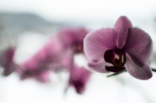 Foto profissional grátis de borrão, concentração, cor, flor